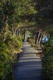 Путь велосипеда в древесинах Стоковая Фотография