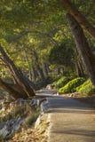 Путь велосипеда в древесинах Стоковое фото RF