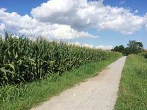 Путь велосипеда через кукурузные поля Стоковое Изображение RF
