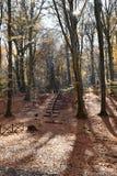 путь взгляда деревянный в парке осени Стоковые Фотографии RF