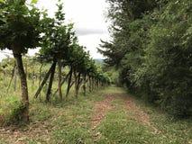 Путь виноградников и природы стоковые изображения rf