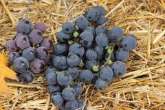 путь виноградин клиппирования пука включенный Стоковое Изображение RF