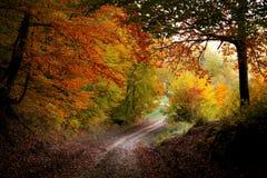 Путь вне от леса Стоковые Фото