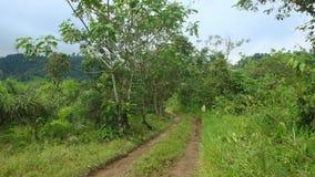 Путь внутри африканской фермы ладони в районе леса облака Стоковые Изображения