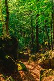 Путь водя вниз с холма Стоковое Изображение