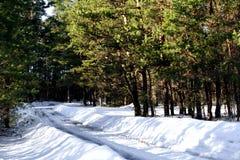 Путь водя к лесу во время зимы стоковые фото