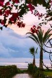 Путь водя к пляжу в Ларнаке, Кипре цветет валы пинка ладони Стоковые Изображения