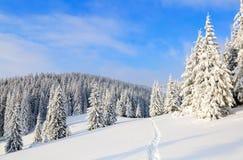 Путь водит к снежному лесу Стоковое Фото