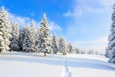 Путь водит к снежному лесу Стоковое Изображение RF