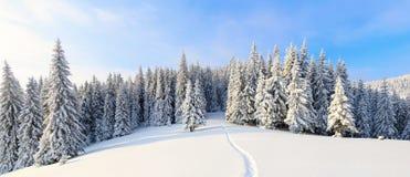 Путь водит к снежному лесу Стоковое фото RF