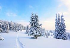 Путь водит к снежному лесу Стоковая Фотография RF
