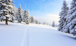 Путь водит к снежному лесу Стоковые Фото