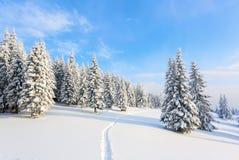Путь водит к снежному лесу Стоковые Изображения RF