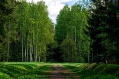 Путь водя в лес стоковые изображения