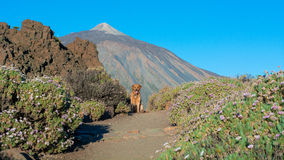 Путь вулканов стоковые фото
