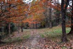 Путь выровнянный Hemlock Стоковая Фотография