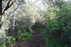 Путь в взгляде леса Стоковая Фотография RF