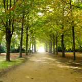 Прогулка в парке Стоковая Фотография