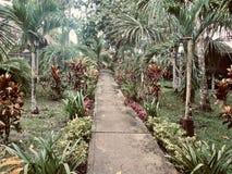 Путь в годе сбора винограда джунглей стоковые изображения