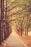 Путь в годе сбора винограда парка ретро Стоковая Фотография