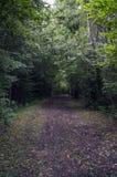 Путь в глубоком лесе Стоковое Фото