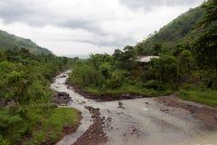 Путь в джунглях стоковые изображения rf