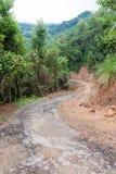 Путь в джунглях стоковое фото