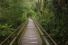 Путь в джунглях стоковая фотография rf