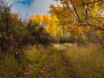 Путь в древесинах в октябре стоковые изображения