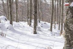 Путь в древесине стоковое изображение rf