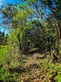 Путь в древесины Стоковое фото RF