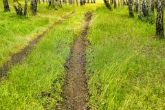 Путь в лесе березы лета Стоковые Фото