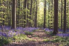 Путь в лесе весеннего времени стоковая фотография rf