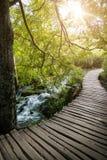 Путь в лесе лета стоковая фотография