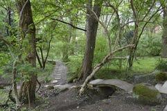 Путь в лесе и мосте Стоковая Фотография RF