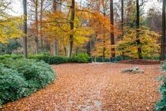Путь в лесе осени с изумительными цветами и листьями Стоковая Фотография RF