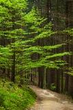 Путь в лесе Стоковые Фото