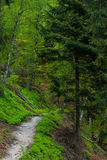 Путь в лесе Стоковая Фотография