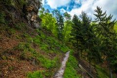 Путь в лесе Стоковые Фотографии RF
