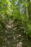 Путь в лесе fairy зеленого цвета с стартовыми площадками Вашингтоном Стоковые Изображения RF