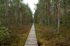 Путь в естественном парке стоковое фото