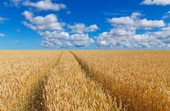 Путь в золотом пшеничном поле стоковое изображение rf