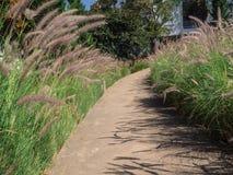 Путь в курорте и зеленом дереве Стоковые Изображения RF