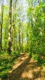 Путь в лесе весной стоковые фото