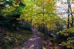 Путь в лесе гор Вогезы стоковые изображения rf