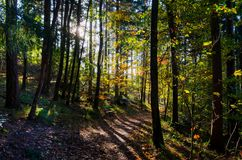 Путь в лесе гор Вогезы стоковая фотография