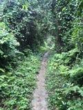 Путь в лесе джунглей стоковые фотографии rf