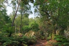 Путь в лесе Фонтенбло стоковые фото
