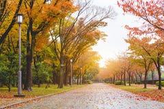 Путь в осени стоковые фото