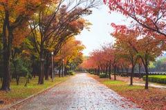 Путь в осени Стоковое Изображение